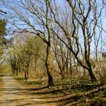 Aanliggend bospad